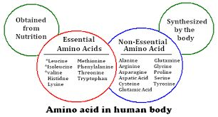 amino-acids-pathway