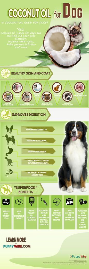 Benefits of Coconut Oil for Dogs Infographic