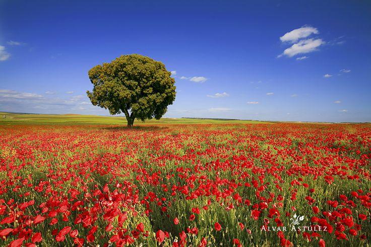 Spring in the fields by Alvar Astúlez on 500px