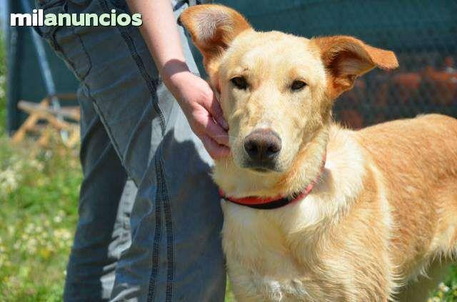 MIL ANUNCIOS.COM - Cachorros adopcion. Compra-venta de perros cachorros adopcion en Madrid. Regalo de cachorros..