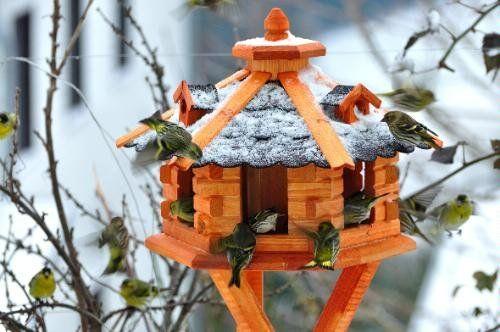 Deko-Shop-Hannusch Nichoir à oiseaux avec bardeaux en asphalte: Amazon.fr: Animalerie