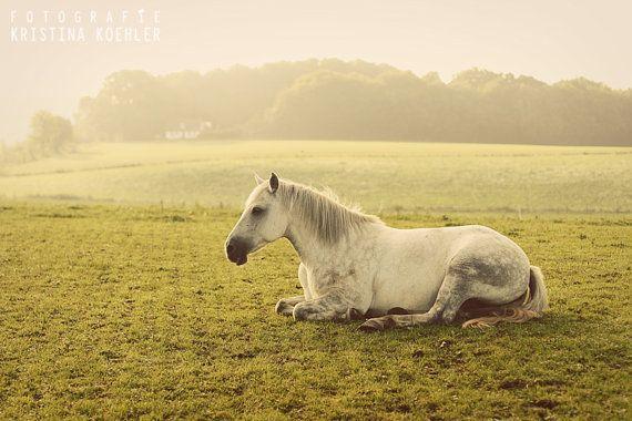 animal photography, EARLY MORNING, dreamy, cute, calm, horse, pony, nursery, kids, wall art, decor, photo print