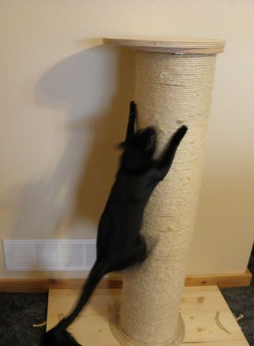 The VERY BEST (huge, tall, heavy) cat scratching post you'll ever see. DIY with pictures and lots of information. I'm doing this this summer...