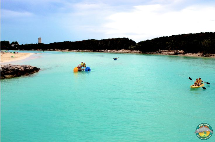 Not only can you play in our awesome aqua park, but we have TONS of water sports! Aqua bikes, kayaks, paddle boards - you name it! Such a fun way to spend the day :). Dolphin Encounters, Blue Lagoon Island, Bahamas