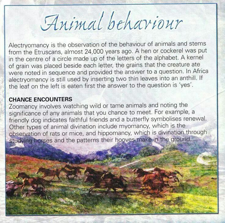 a look at the psychology of animal behavior A look at the lana project, washoe, a comparison with human communication and evaluation of research close × learn more psychology download psychology articles , body language & dream interpretation guides and more download articles , guides and more.