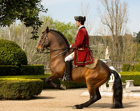 Levade – Portuguese School of Equestrian Art © PSML.