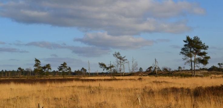 Verken de Loonse en Drunense duinen. Foto: Wikimedia Commons, CC BY-SA 3.0