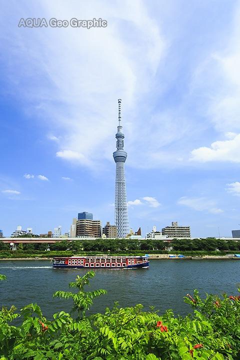 東京スカイツリーと夏空  隅田川 水上バス
