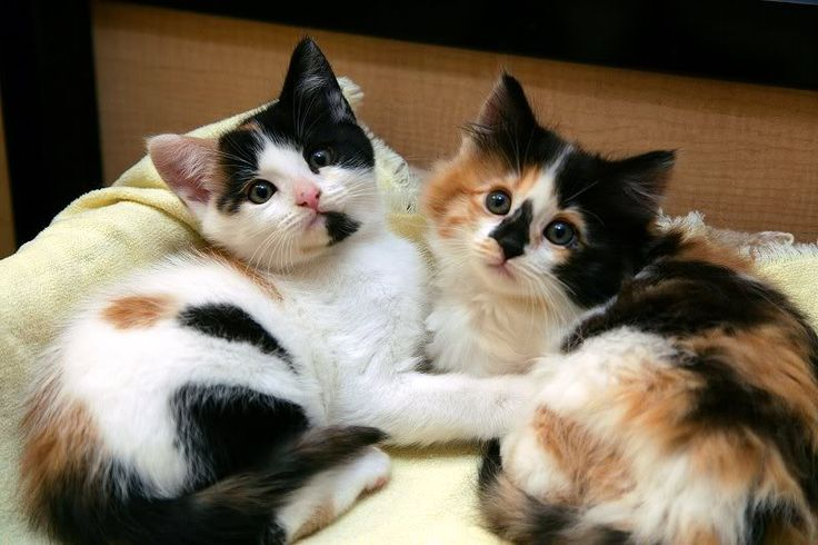 If given the option of calico or not calico, always choose calico.