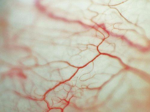 venas del ojo / eye veins by matutino! on Flickr.