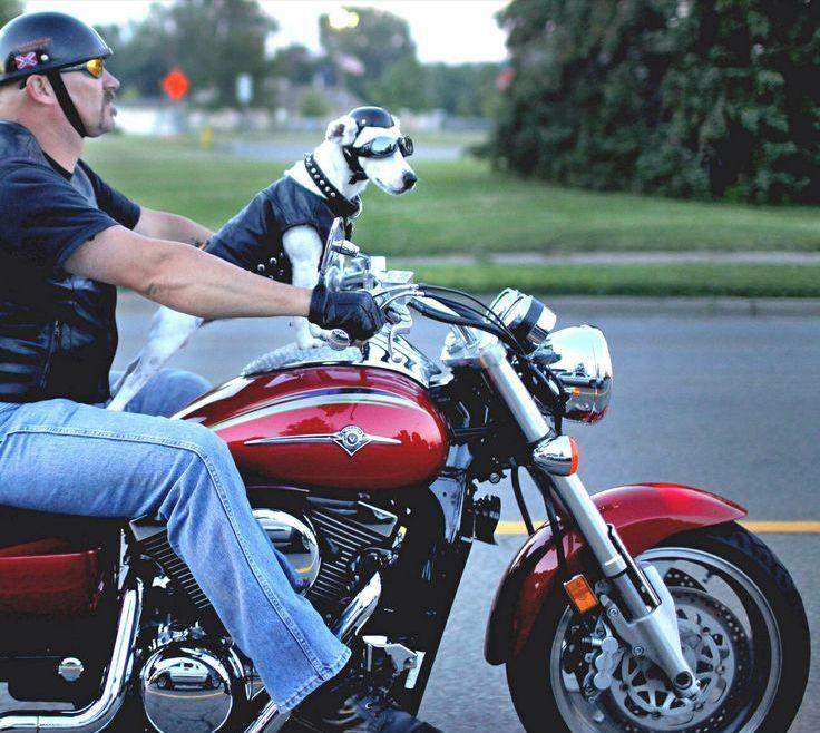 Motorcycle Helmets for Dogs - Man's Best Friend ...