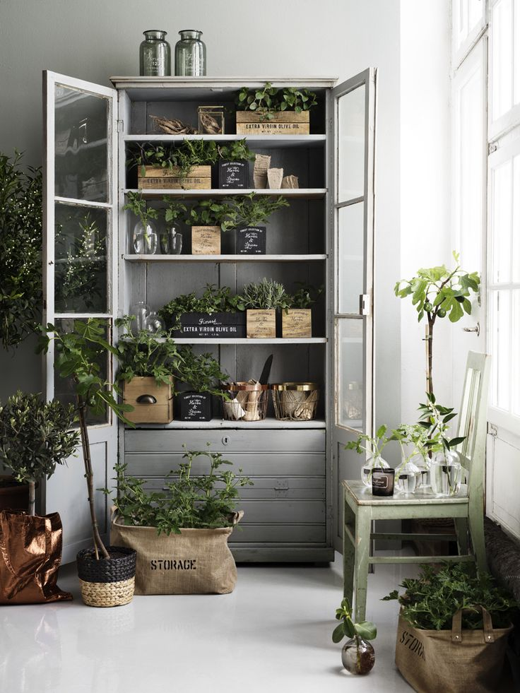 Portfolio | Lotta Agaton - old display cabinet used for plants