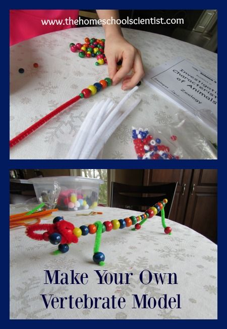 Make Your Own Vertebrate Model - The Homeschool Scientist