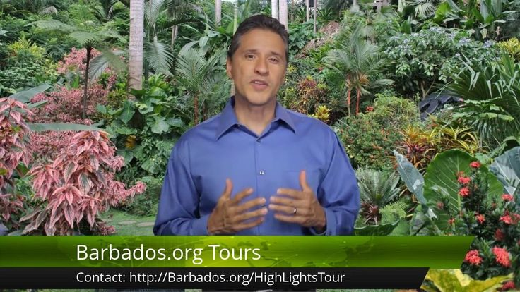 Step into the magical world of Hunte's tropical gardens in #Barbados!
