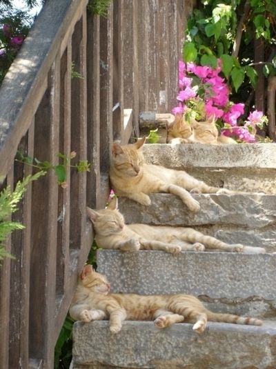 Orange Cats on Stairs