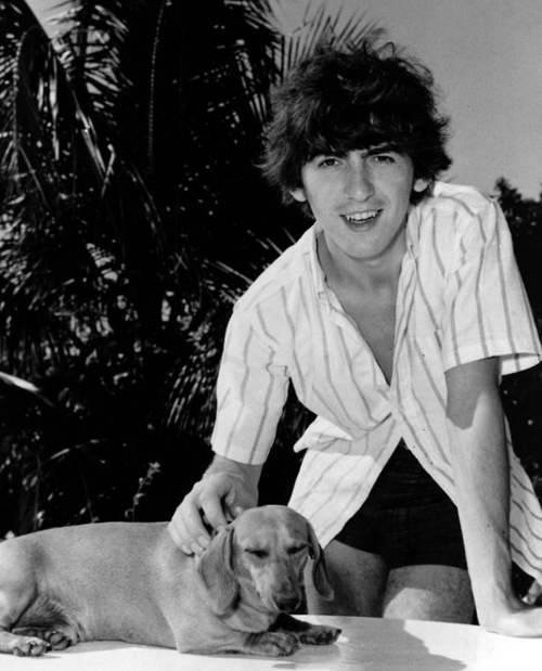 George Harrison With A DoxieI Knew He Was My Favorite Beatle For Reason