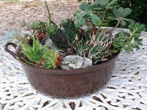Succulents in le creuset pot