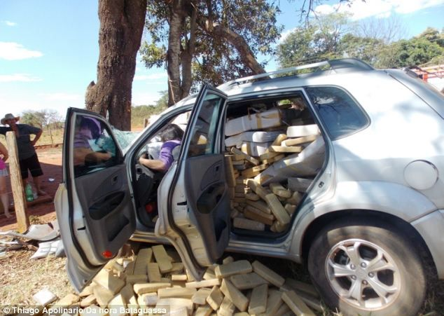 One death from marijuana? The Brazilian man died after he lost control of his car and hit a tree, resulting in his half-ton stock of weed stored in the backseat shooting forward.