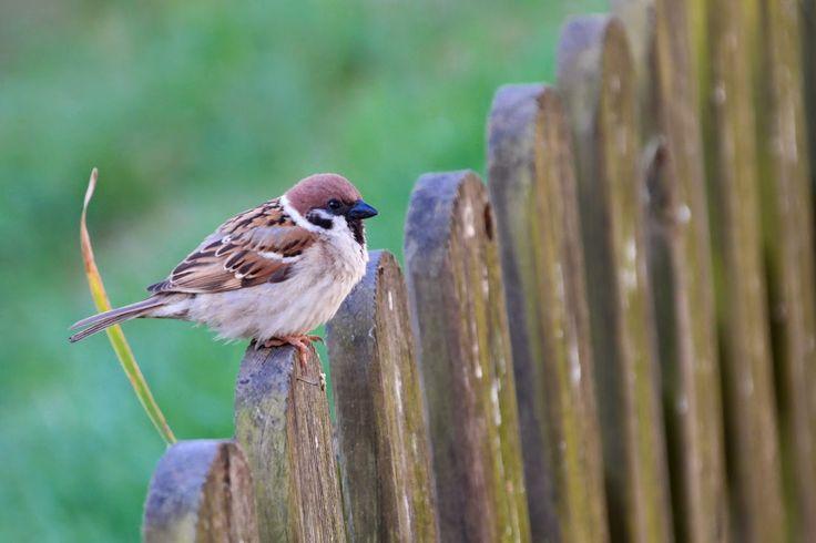 ptaszarnia: przycupnięta ptaszyna