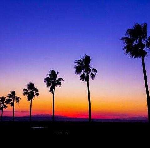 Way-to-Heaven #cyrcaoriginals #cyrcaoriginalsshirts #tee #shirt #fashion #streetwear #palmtrees #heaven #summerfashion #summer Photo by @pucuk_ryoco #pucuk_ryoco