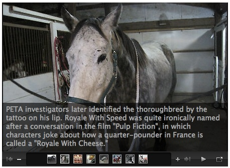 slaughtering for the humanness of horses essay While slaughtering is an option for putting injured or malnourished horses out of their misery, it is an inhumane practice for both the horses and human beings and there are more appealing options to take into consideration that would help us completely ban slaughtering.