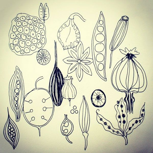 Image result for nature pods