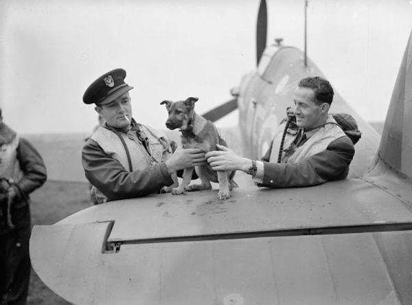 Pilot Officers Jan Zumbach (left) and Miroslaw Feric, two Polish fighter pilot aces playing with the Squadron's mascot - Battle of Britain 1940