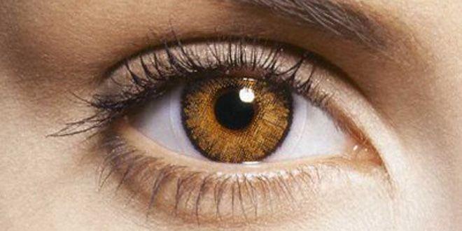 ¿Sabías que cada ojo tiene seis músculos para mover el globo ocular?