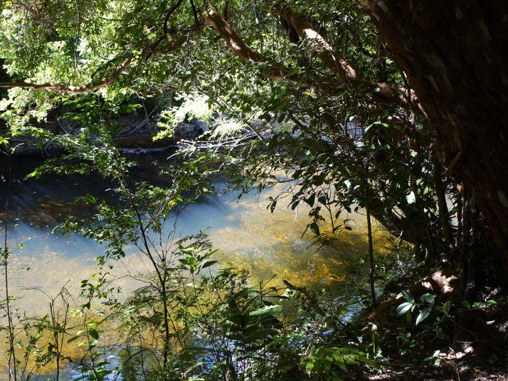 Parque. Aiken del Sur es un área turística educativa que se extiende a través de 250 hectáreas lindantes con el lago Riesco y a los esteros del salto. Fotografía tomada por MAMC-TOÑA