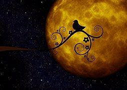 Moon, Planet, Light, Bird, Kringel