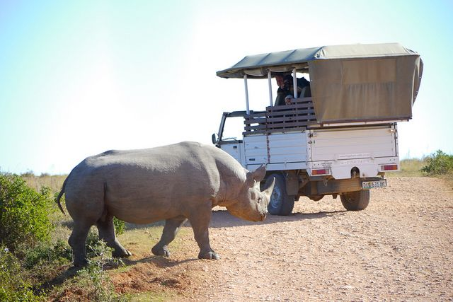 Danger! Rhino passing