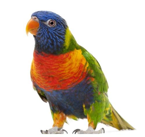 www.petclic.es la mayor tienda online de productos para #mascotas. La mayor biblioteca de contenido y consejos sobre mascotas. 1.000 consejos. 50.000 imágenes. Foto del #aves #pajaros #animal #loros