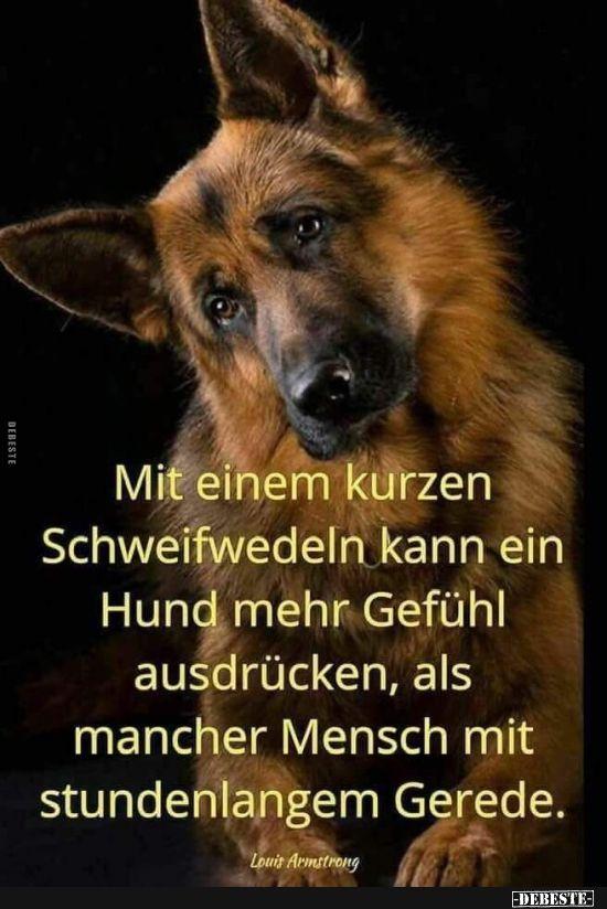 Mit Einem Kurzen Schweifwedeln Kann Ein Hund Mehr Gefuhl Ausdrucken Lustige Bilder Spruche Witze Echt Lustig Hund Zitat Tierspruche Lustige Bilder