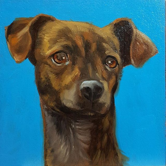 Victor Dog #60 part of my Shelter Dog Series as well as the first of my February 30 Brown Dogs. #dog #brown #dogportrait #1001dogs.tumblr.com #30paintingsin30days #yearofthedog #daspinterest #danaaldisstudio