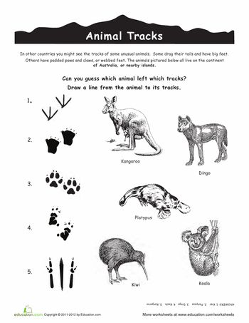 Worksheets: Australian Animal Tracks