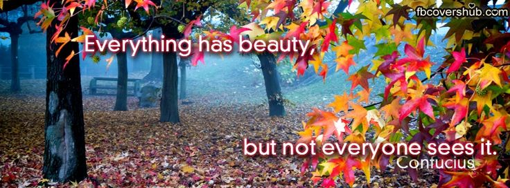 Everything Has Beauty Fb Cover