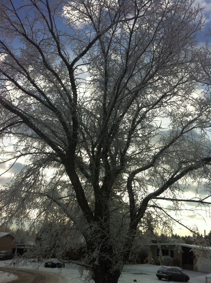 Dec31,2013 wintery day