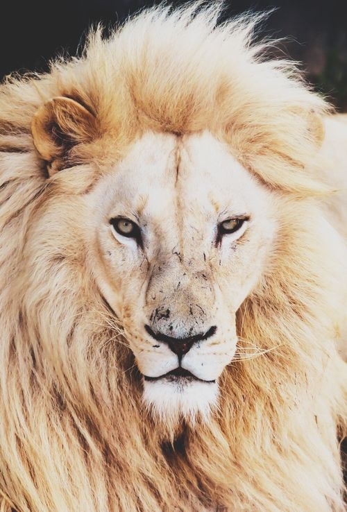 You know you are truly alive when you're living among lions.  ― Karen Blixen, Out of Africa
