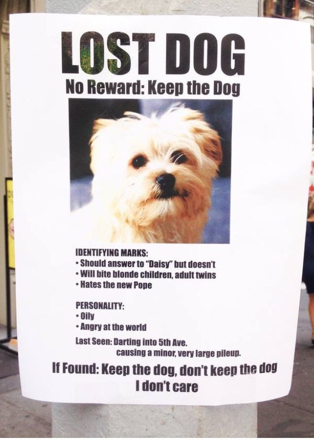 Lost Pet Poster Template] Editable Missing Lost Pet Writing Frames ...