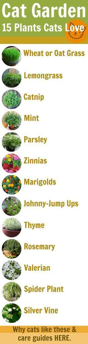plantes pour le chat