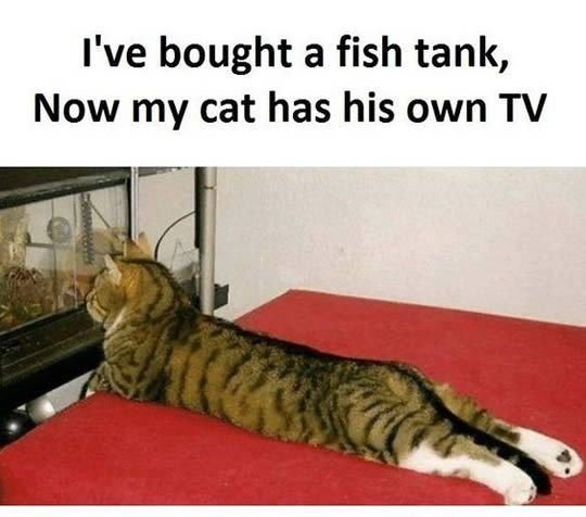 Cat has his own TV now.