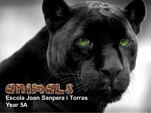 Animals year 5A 2013-14