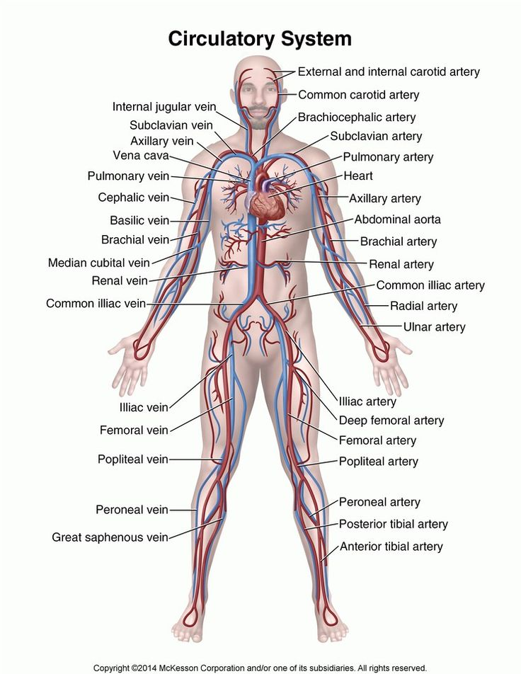 693 best Anatomy images on Pinterest | Physical therapy, Columns and ...