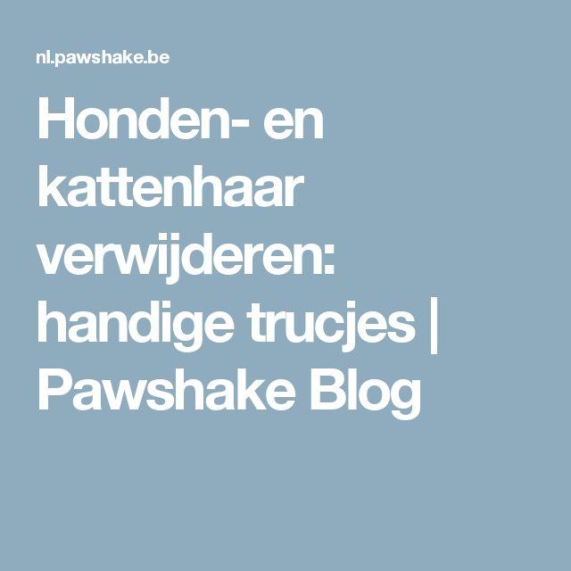 Honden- en kattenhaar verwijderen: handige trucjes | Pawshake Blog