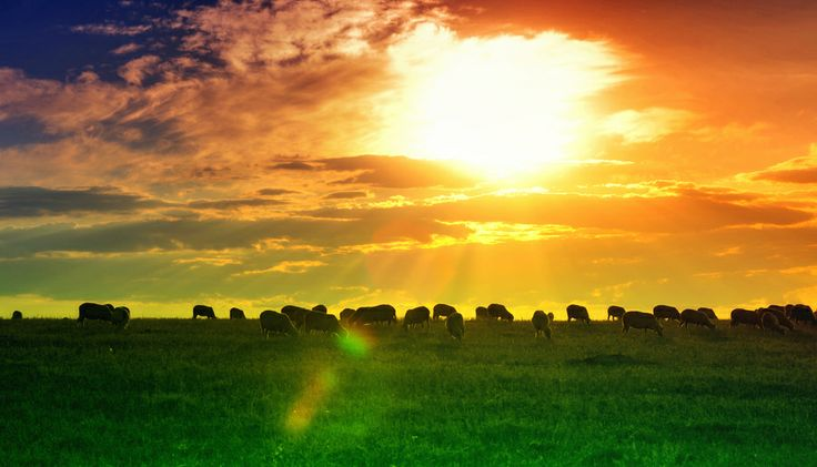 Sunset on the field by George Fotografescu on 500px