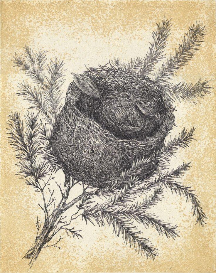 Eastern Spinebill nest etching  Artist Sandi Rigby