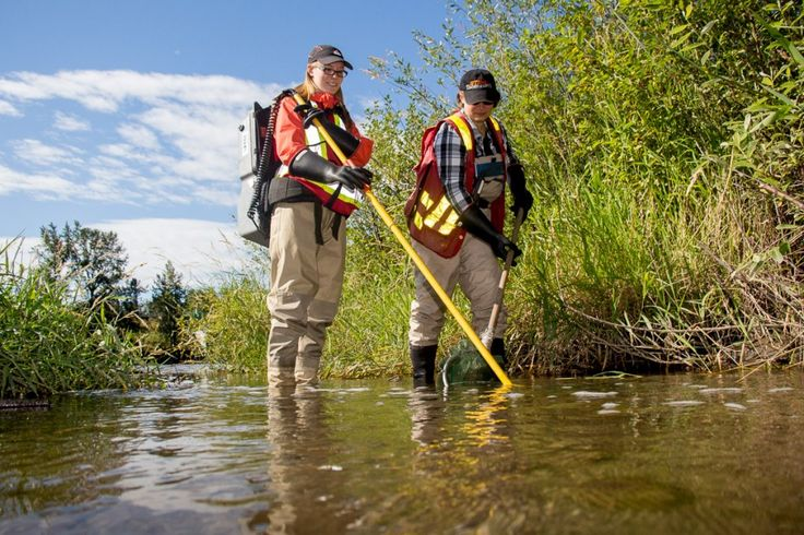 Fish Salvage using Electrofishers - Environmental Monitoring