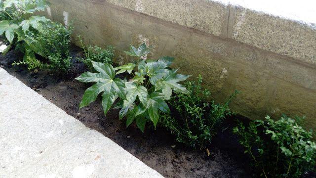 M s de 25 ideas incre bles sobre arbustos de hoja perenne for Arboles crecimiento rapido hoja perenne