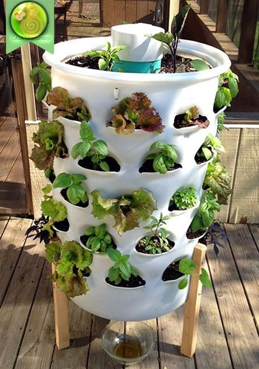 Pflanzen pflanzen pinterest pflanzen g rten und for Zimmerpflanzen hydrokultur