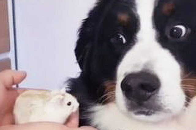 The 25 Funniest Dog Videos Of 2017 | Cuteness